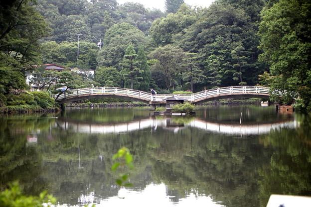 7月の薬師池風景
