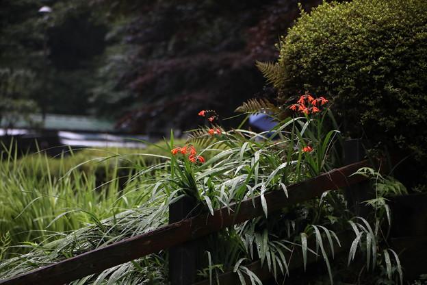 小雨で濡れた花風景