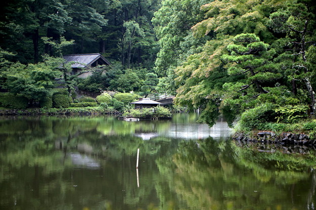 静寂な池風景(薬師池)
