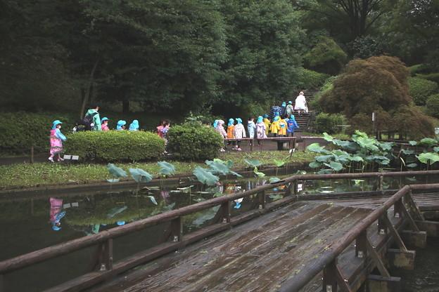 薬師池の幼稚園児の散策