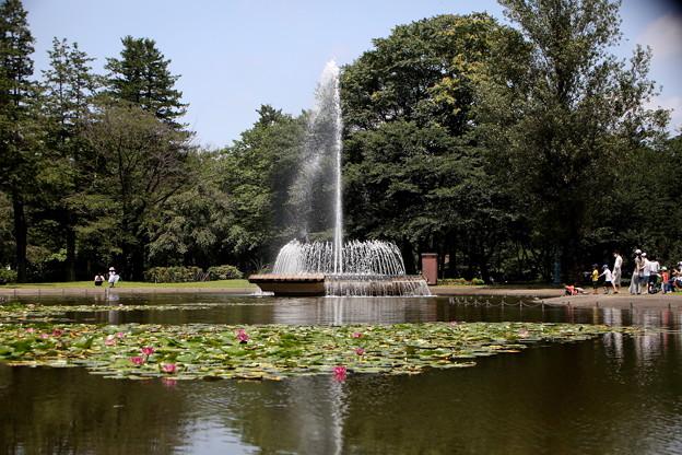 Photos: 睡蓮と噴水のある彩の森公園