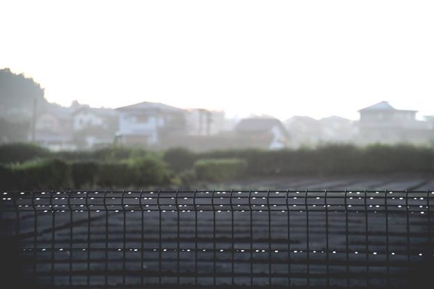 雨上りの夜明け風景
