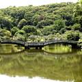薬師池のタイコ橋風景
