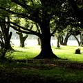 林からの木々