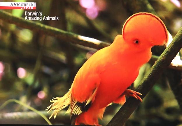 珍しい鳥 テレビ画像 鳥の名前不明