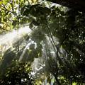 朝の木洩れ日 植木に水撒き