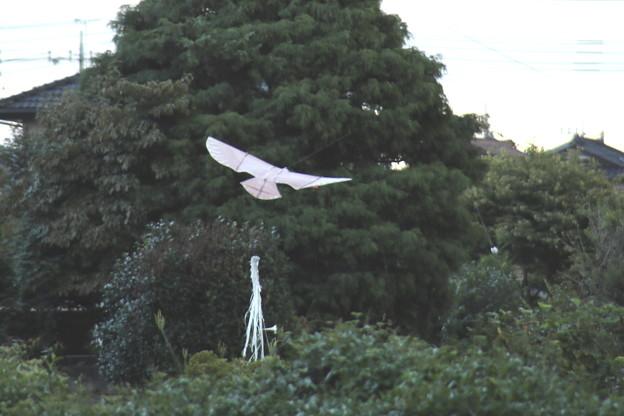 野鳥追い払いの凧の鳥