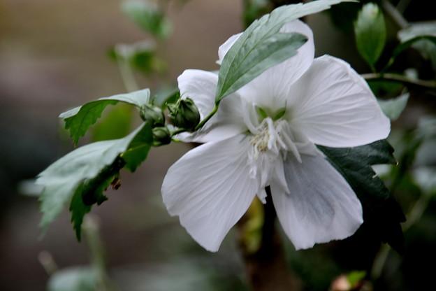 Photos: 白い花 名前不明