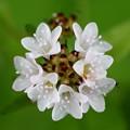 雑草の花アップ 花の名前不明