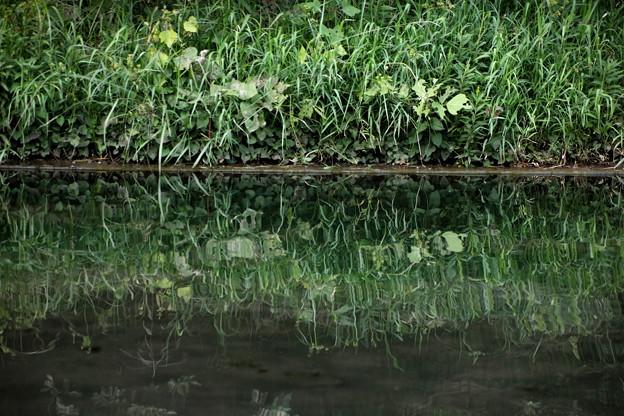 池への映り込み