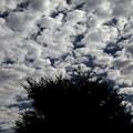 Photos: 朝のウロコ雲