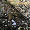 Photos: 徳和渓谷の秋の渓流