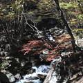 Photos: 紅葉した徳和渓谷の流れ