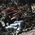 Photos: 紅葉の徳和渓谷の風景