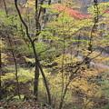 紅葉の散策 吾妻渓谷