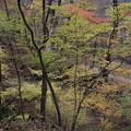 紅葉の散策道 吾妻渓谷