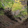 紅葉の散策 吾妻渓谷2