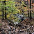 紅葉する吾妻渓谷風景