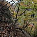 見晴らし台へ登る横の紅葉