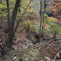 吾妻渓谷 散策山道からの紅葉