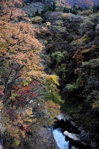 吾妻渓谷の紅葉9