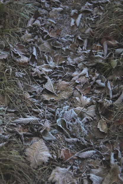 落葉への霜風景