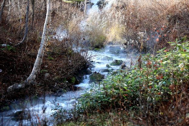 チャツボミゴケ公園の渓流