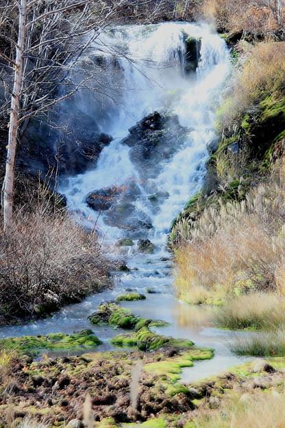 チャツボミゴケ公園の滝と苔