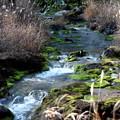 チャツボミゴケ公園の苔の沢の流れ