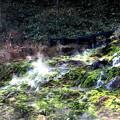 Photos: チャツボミゴケ公園の秋風景