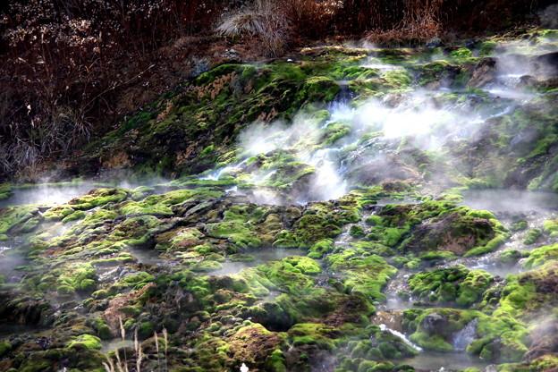 Photos: 圧巻 秋のチャツボミゴケの苔風景(穴地獄)