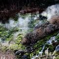 Photos: 秋の苔と湯けむり立つチャツボミゴケ公園