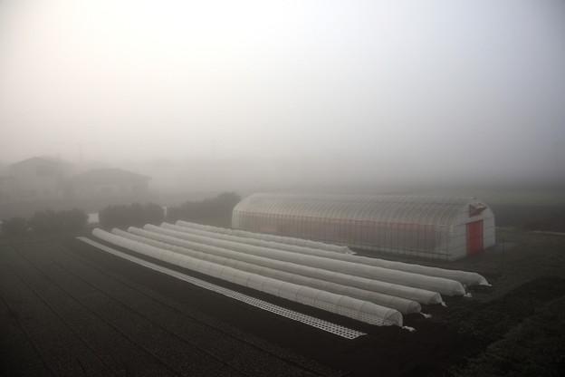 ベランダからの朝の濃霧風景
