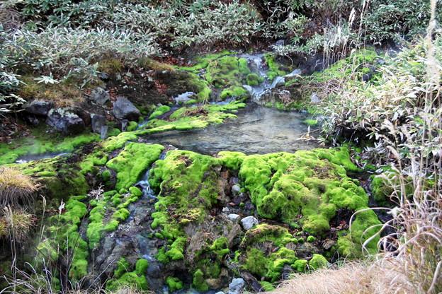 秋苔の池 チャツボミゴケ公園