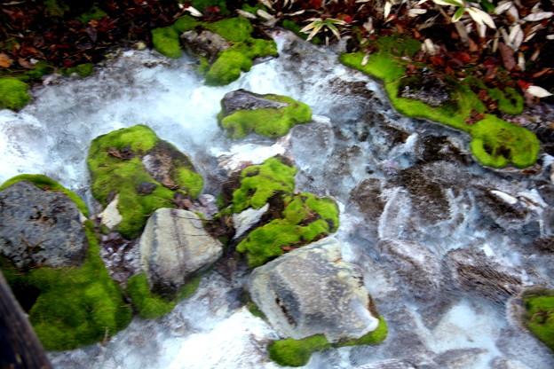 苔の生す岩の間流れる沢 チャツボミゴケ公園