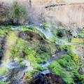 Photos: 陽射しと湯けむりで霞むチャツボミゴケ公園