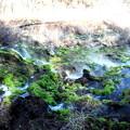Photos: 奇形の苔風景 チャツボミゴケ公園