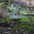 Photos: チャツボミゴケ公園の苔の群生地風景