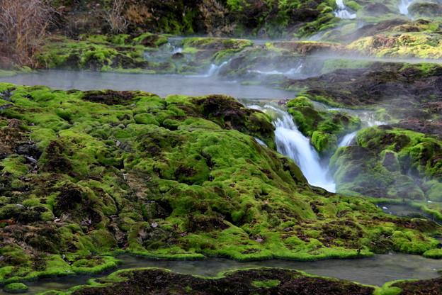 苔のなかの小さな滝風景 チャツボミゴケ公園