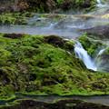 Photos: 苔のなかの小さな滝風景 チャツボミゴケ公園