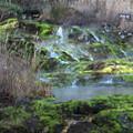 Photos: チャツボミゴケ公園 秋の苔の群生地