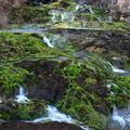 チャツボミゴケ公園の苔の群生地風景B