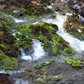 壮観な苔の渓流風景 チャツボミゴケ公園