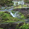 苔の陸丘の風景 チャツボミゴケ公園