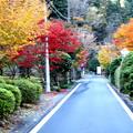 寸又峡の道路の紅葉