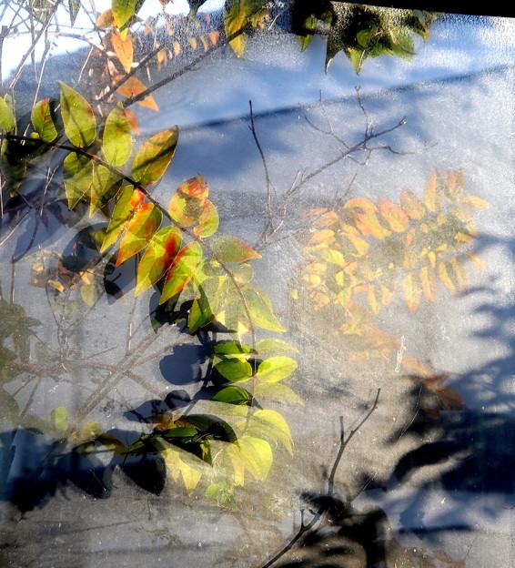 朝の窓 葉の幻想的な造形