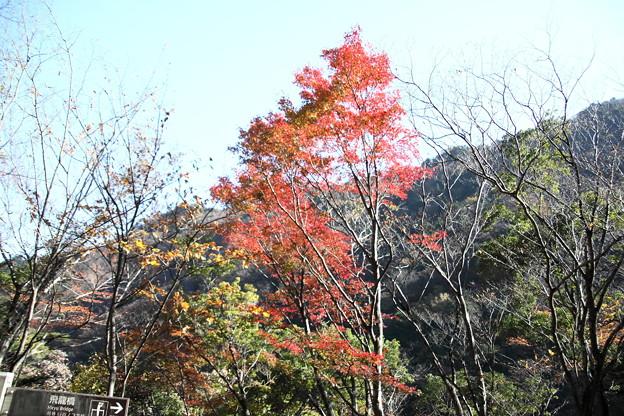 飛龍橋への紅葉