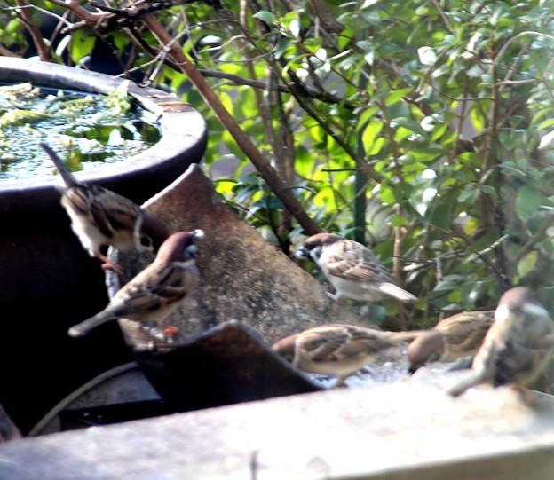 窓超しの雀の餌場