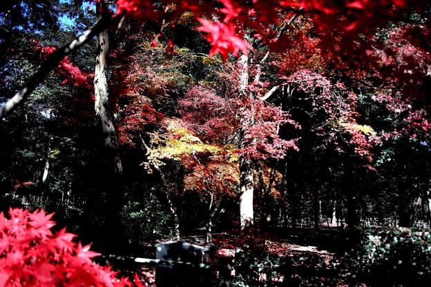 平林寺の紅葉1