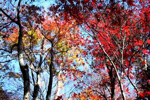 平林寺の紅葉風景1